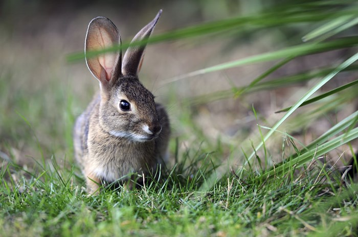 Rabbit Donation