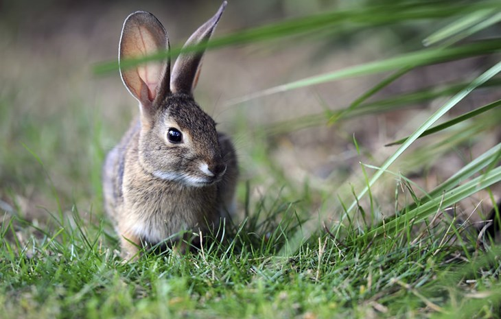 Learn about rabbits and how they are farmed | Compassion in