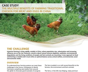 Case study - Chickens in China