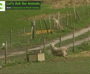 Let's Ask the Animals