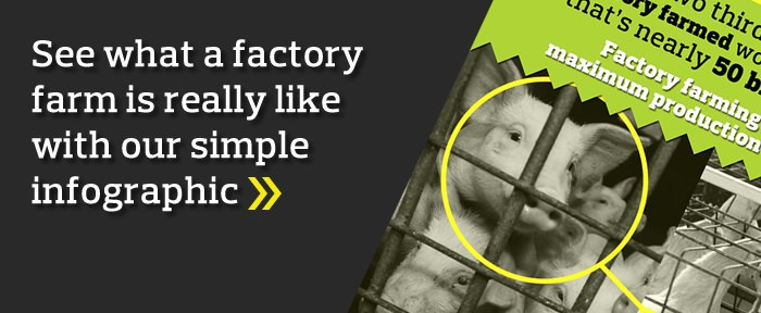 See what a factory farm is really like with our simple infographic >>