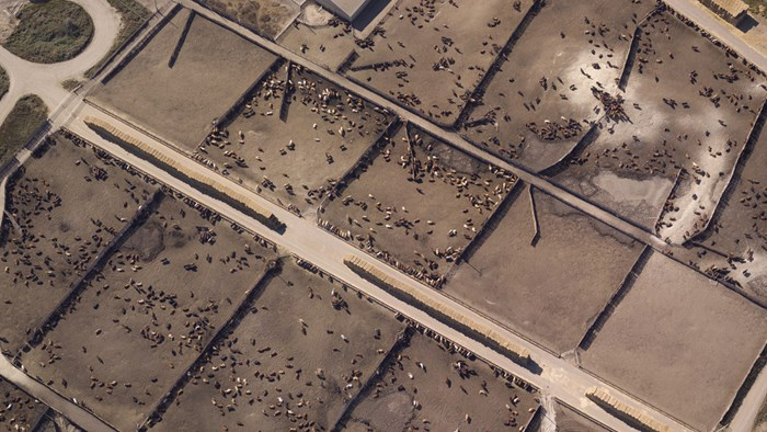 Aerial shot of a concentrated animal feeding operation
