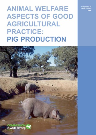 Animal Welfare Aspects of Good Agricultural Practice: Pig Production