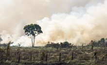 Slash and burn farming methods in South America