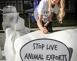 Live export protest Evanna Lynch.jpg