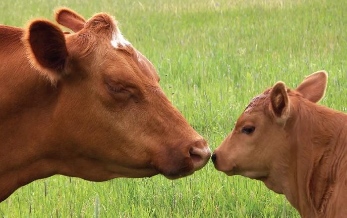 Animal Sentience
