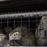 Think your quail eggs are high-end? The vast majority are factory farmed in atrocious conditions