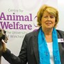 The religious imperative for animal welfare