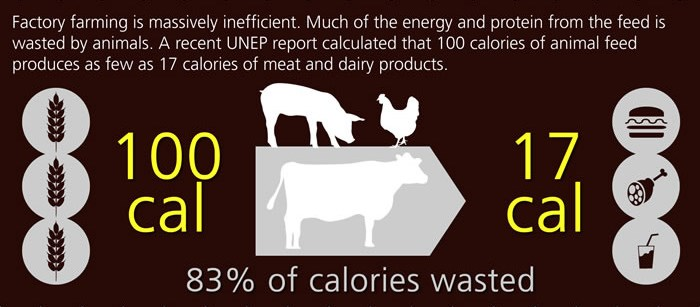 animal feed infographic