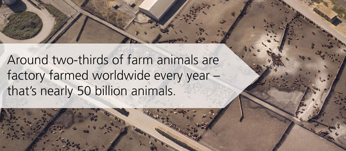 factory farming is animal cruelty Listen to animals australia's latest radio campaign and help end the cruelty of factory farming.