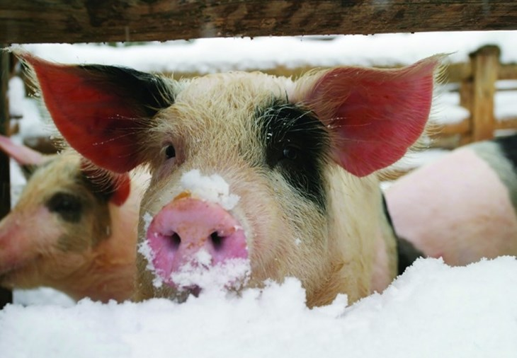 a recipe for a compassionate christmas compassion in world farming