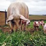 Agriculture ministers call for better animal welfare standards