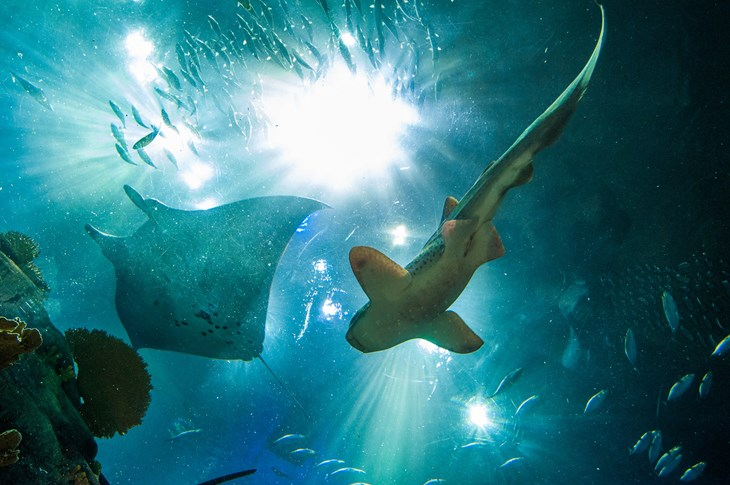 Ray and shark from below 2125x1411.jpg