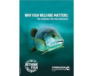 Why Fish Welfare Matters